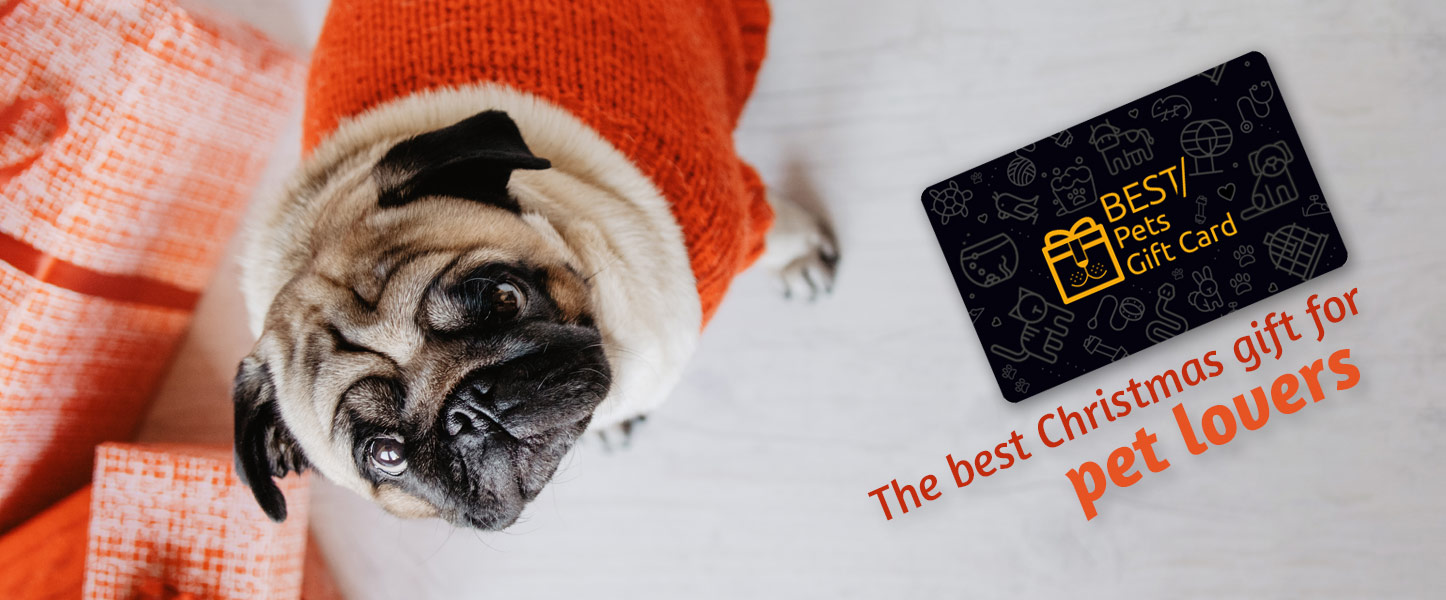 Christmas Gift Ideas For Pet Lovers Best Gift Cards